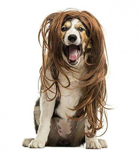 Wallmonkeys WM197986 Border Collie Sitting with a Red Hair Wig Peel and Stick Wall Decals (24 in H x 22 in W)