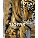 Tigers: A Celebration of Lifeby Andy Rouse