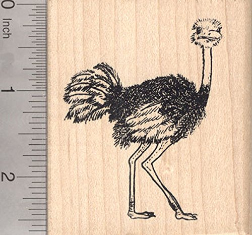 Ostrich Rubber Stamp, Flightless Bird of Africa