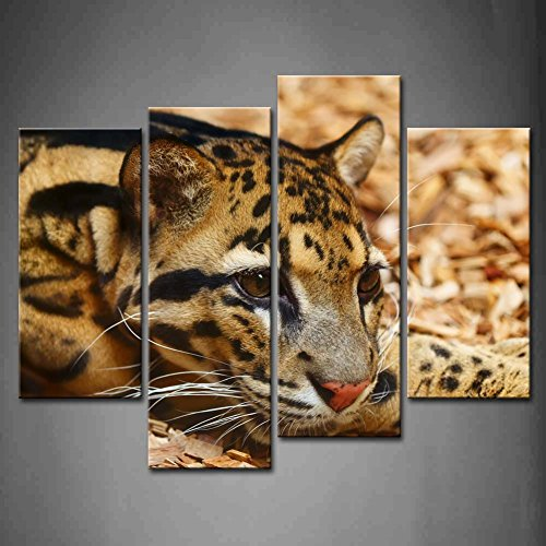 4 Panel Wall Art Amur Leopard Lie On Yellow Land Painting The Picture Print On Canvas Animal Pictures For Home Decor Decoration Gift Piece (Stretched By Wooden Frame,Ready To Hang)