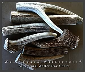 West Texas Wilderness® Natural Deer Antler Dog Chews JUMBO Size - ONE POUND!