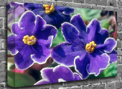 "Purple Annual Delphinium Flower Canvas Art Canvas Print Picture print Size: (50"" x 36"")"
