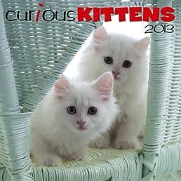 Curious Kittens 2013 Calendar