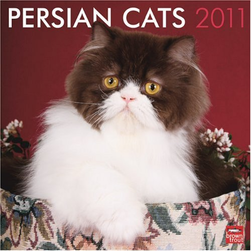 Persian Cats 2011 Square 12X12 Wall Calendar
