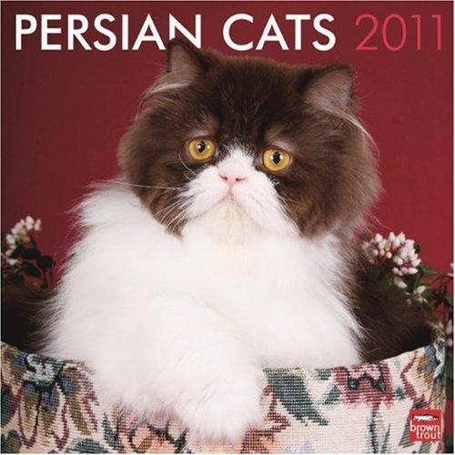 Persian Cats 2011 Square 12X12 Wall Calendar