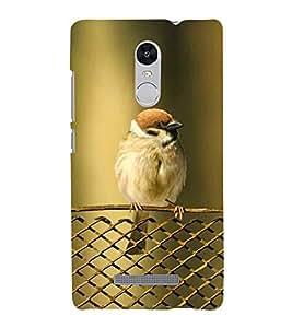 KOOKABURRA BIRD A BEAUTIFUL CREATION OF NATURE 3D Hard Polycarbonate Designer Back Case Cover for Xiaomi Redmi Note 3 :: Xiaomi Redmi Note 3 (3rd Gen)