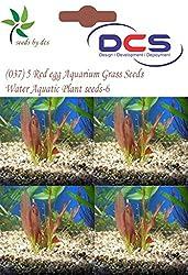DCS(037) 5 Red egg Aquarium Grass Seeds Water Aquatic Plant Seeds-6