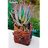 New! 20 Pcs Colorful Cactus Rebutia Variety Mix Exotic Aloe Seed Cacti Rare Cactus Office Edible Beauty Succulent Bonsai Plant 15 (Color: 15, Tamaño: Show In Picture)