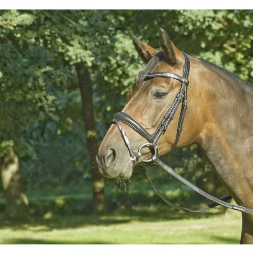 BUSSE Trense PREMIUM-DR, Pony, schwarz/Edelstahl