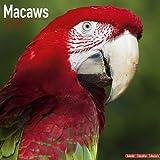 Macaws Avonside Publishing