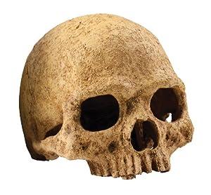 Exo Terra Primate Skull Terrarium Décor for Reptiles