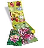 Image de Die original Wildblüten-Essenzen, BOX: Mit 45 Symbolkarten zur Quelle der Heilung