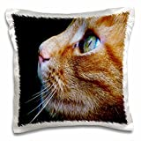 "3dRose pc_203711_1 Print of Beautiful Close-Up of Tabby Cat Pillow Case, 16"" x 16"""