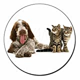 Italian Spinone Dog and Kittens Fridge Magnet Stocking Filler, Ref:AD-SP1FM