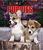 img - for Puppies Weekly 2006 Calendar book / textbook / text book