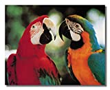 Tropical Birds Macaw Parrots Animal Wildlife Wall Picture 16x20 Art Printt