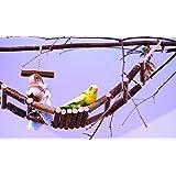Handgefertigte Kletterbrücke aus Naturholz. Tolle Leiter für Vogelkäfig