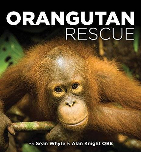 the secret life of the orangutans Buy the intimate ape: orangutans and the secret life of a vanishing species 1st by shawn thompson (isbn: 9780806531335) from amazon's book store everyday low prices and free delivery on eligible orders.