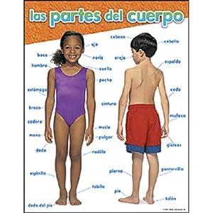 Amazon.com : SCBT-38514-20 - CHART LAS PARTES DEL CUERPO pack of 20