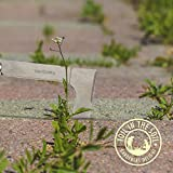 Toil in the Soil Paving Hand Weeder - 12.2 inch Overall Length, Rugged Stainless Steel L-Shaped Blade with Multiple Cutting Edges, Weed Removal Tool Ideal for Small Crevices