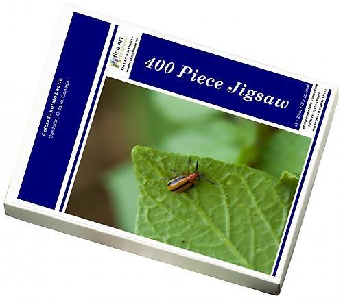 photo-jigsaw-puzzle-of-colorado-potato-beetle