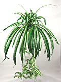 Artificial Silk Spider Plant with Babies - 40cm dia, Variegated, 60 Leaves