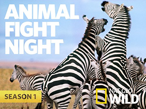 Animal Fight Night, Season 1