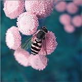 Alu Dibond 100 x 100 cm: Honigbiene – Pastell von blackpool