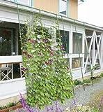 DAIM 緑のカーテン 伸縮立掛け180cm幅 高さ160〜300cm / 第一ビニール