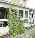 DAIM 緑のカーテン 伸縮立掛け180cm幅 高さ160~300cm