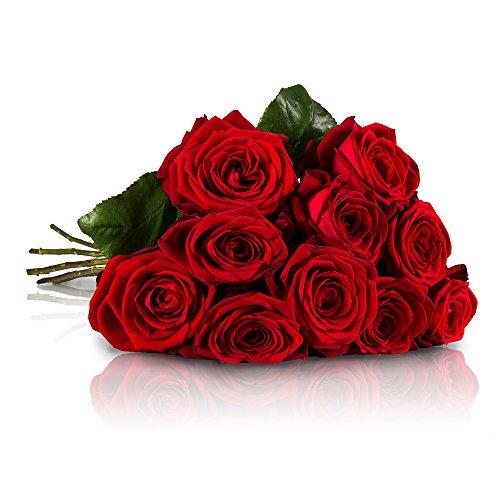 miflora-blumenstrauss-mit-10-red-naomi-rosen-mit-xxl-blutenkopfen