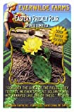 Everwilde Farms - Eastern Prickly Pear Native Wildflower Seeds - Jumbo Seed Packet (10)