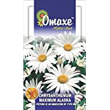 Chrysanthemum Maximum Alaska White 50 Seeds Combo Pack