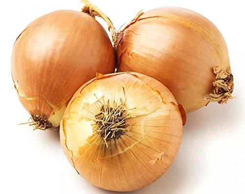 100-organically-grown-giant-walla-walla-sweet-onion-seeds-heirloom-non-gmo-allium-cepa-mild-and-deli