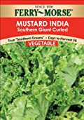 Ferry-Morse 1312 Mustard Green Seeds, Southern Giant Curled (2 Gram Packet)