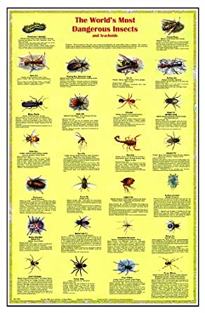 American Educational JPT-0146 Dangerous Insects and Arachnids Poster, 38x26""