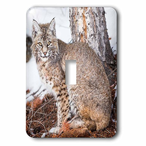 Danita Delimont - Animals - Wyoming, Yellowstone National Park, Bobcat sitting under tree. - Light Switch Covers - single toggle switch (lsp_231908_1)