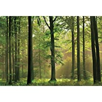 (100x144) Autumn Forest Huge Wall Mural Art Print Poster