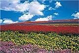 パズルの達人 1500ピース 花咲く丘と青空-富良野 15-524