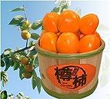 【送料込み】樽に入った珍しい柿『樽柿』 ランキングお取り寄せ