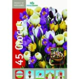 TotalGreen 72405400 Crocus Flower Bulb