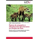 Época de empadre e introducción del morueco en Ovejas de Pelo: Efectos sobre el comportamiento del estro, la tasa...