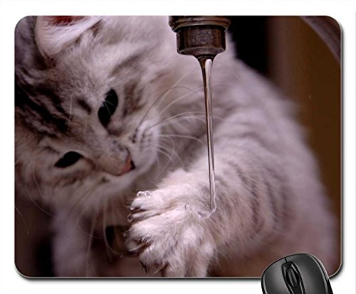 Cat Washing Paw Mouse Pad, Mousepad (Cats Mouse Pad) front-58619