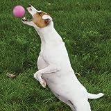 6 Grriggles Fetchables Tough Vinyl Balls for Dogs