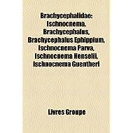 Brachycephalidae: Ischnocnema, Brachycephalus, Brachycephalus Ephippium, Ischnocnema Parva, Ischnocnema Henselii...