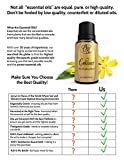 Enhance-Mood-Lifting-Blend-by-Ovvio-Oils-Essential-Oil-Blend-Naturally-Brings-Joy-and-Happiness-Large-15ml
