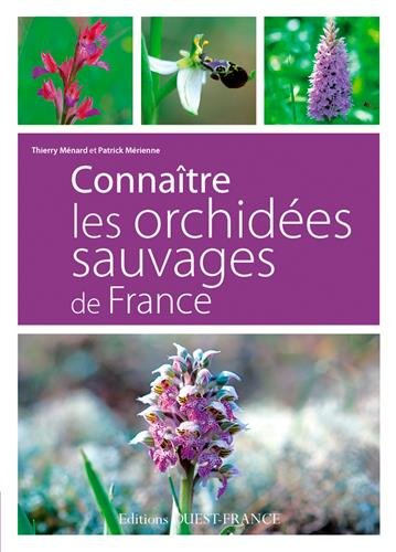connaitre-les-orchidees-sauvages-de-france