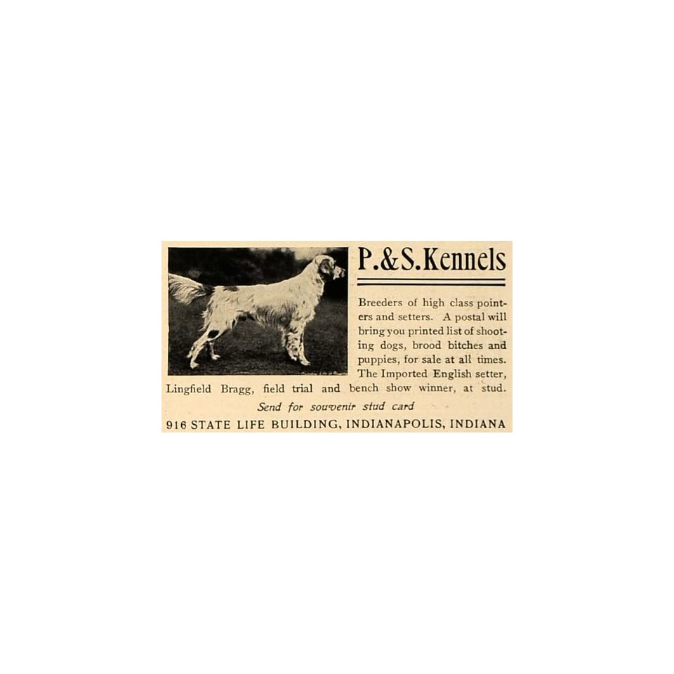 1905 Ad P & S Kennels Breeders Pointers Setters Dogs   Original Print Ad