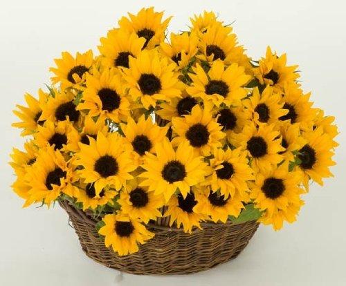 Send Fresh Cut Flowers - 20 Sunflowers
