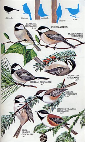 birds of north america revised and updated a guide to